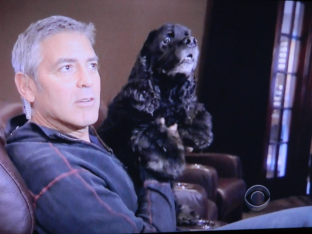Einstein is his dog that was rescued