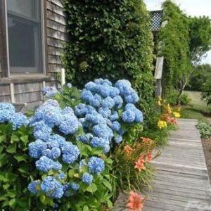 House in Nantucket