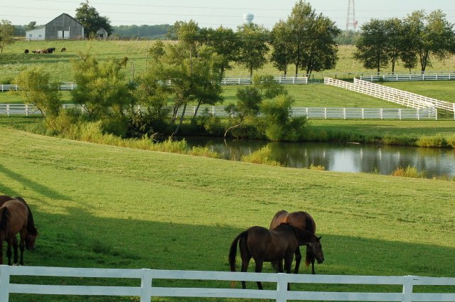 Kentucky Horse and fence