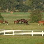 Kentucky mare field image