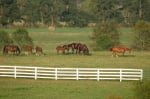 Kentucky Horse Farm For Sale + Kentucky Derby 2012