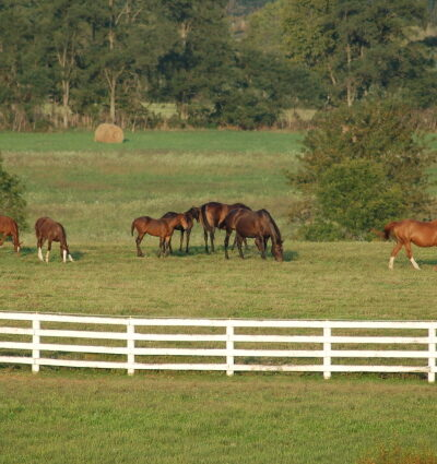 Kentucky mare field image
