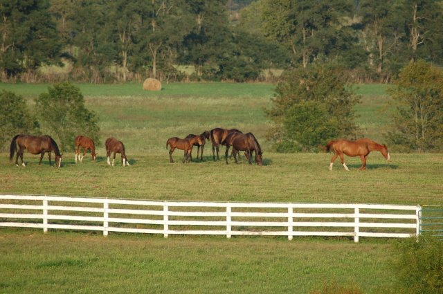Kentucky farm for sale mare field