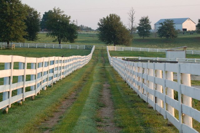 Kentucky paddocks runway image
