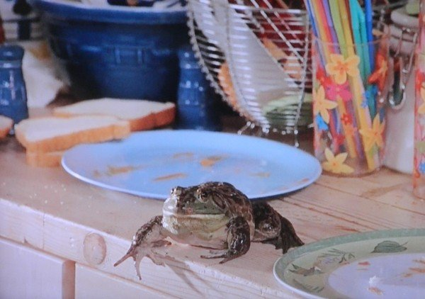 beans the frog from cheaper by the dozen