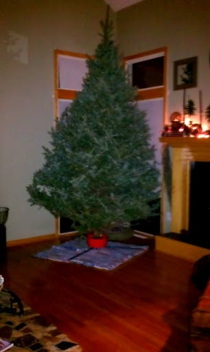 12 Foot Real Christmas Tree