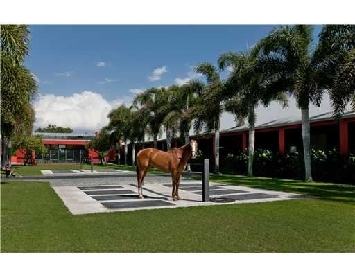 horse at polo estate in Florida for sale