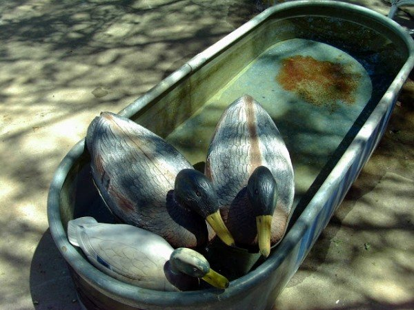 Cottage trailer duck decoys in the pond