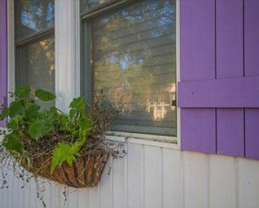 Window box and purple shutters