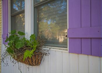 Window box and purple shutters