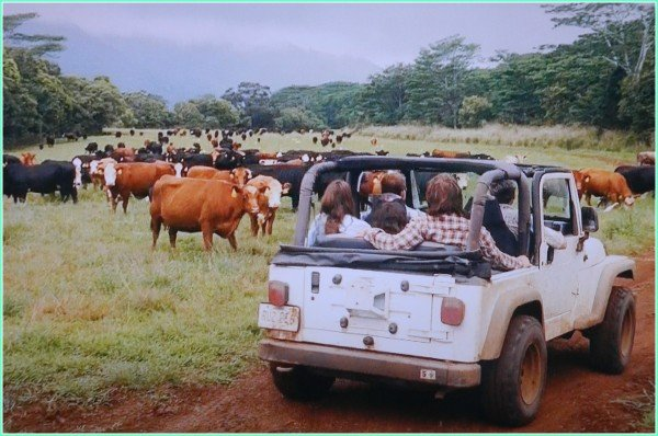 Kipu Kai Ranch the Descendants movie scene