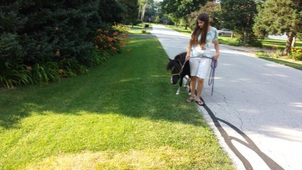 Petite Pony