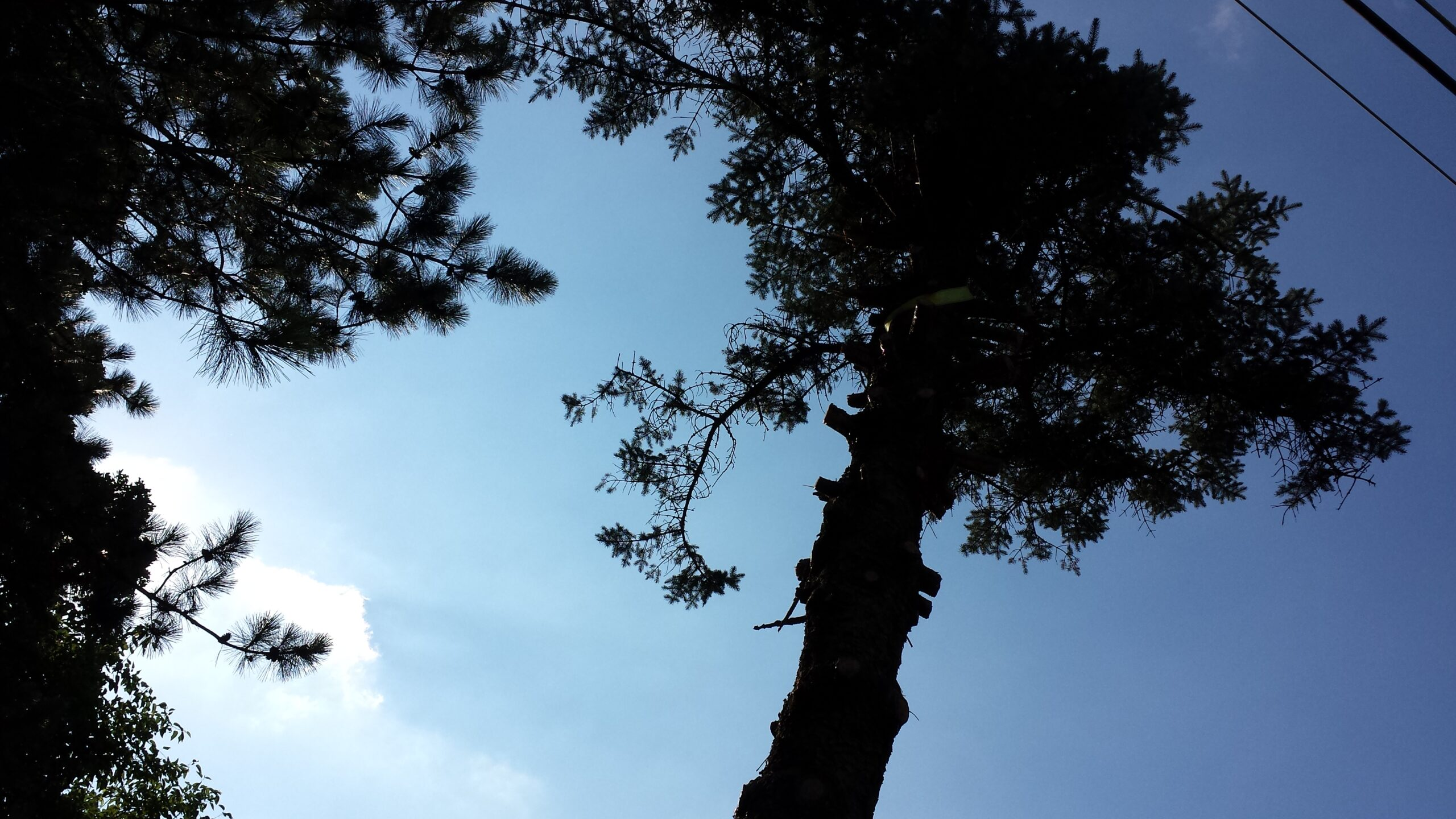 How To Cut Down a Tree – Thinking Out Of The Box