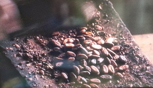 Cacao beans from Chocolat movie scene