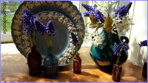 Grape Hyacinths in tiny vases