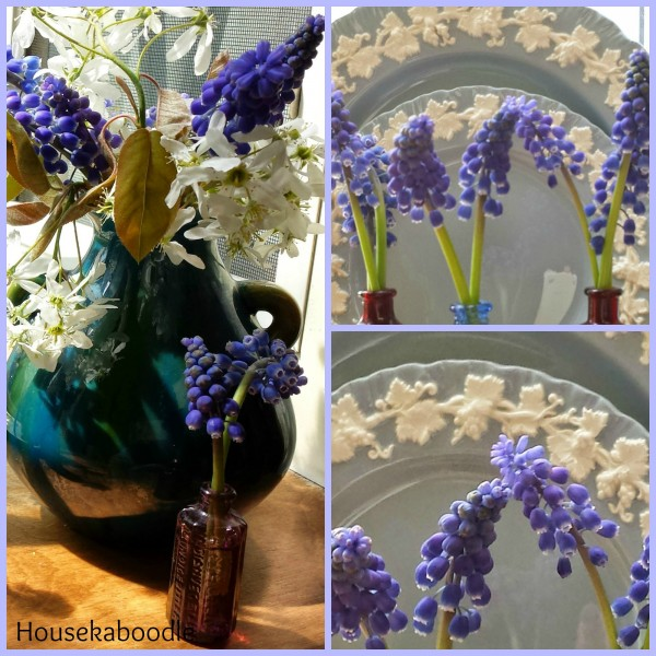 Grape Hyacinth Flowers and Wedgewood blue dinnerware