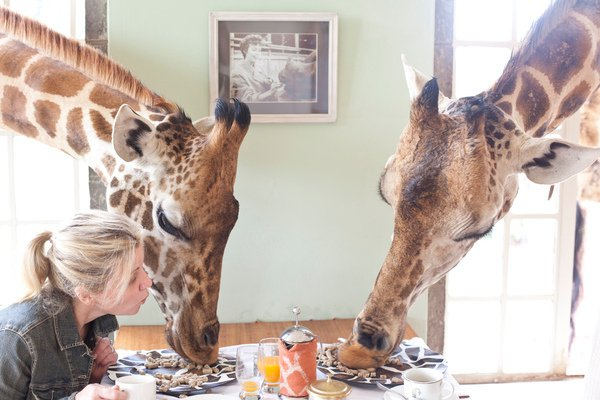 Breakfast with the Giraffe