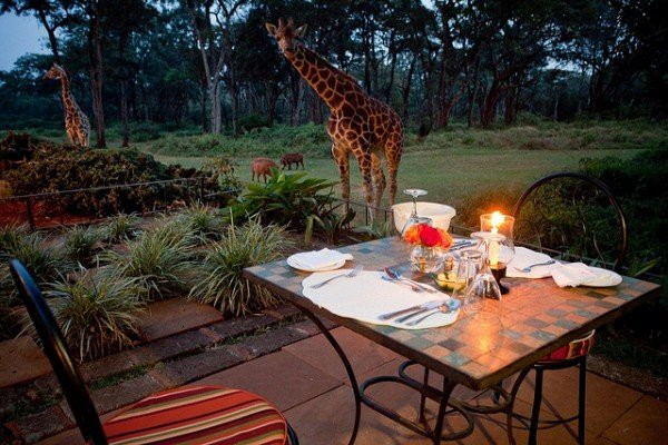 Dinner with the giraffes at the manor