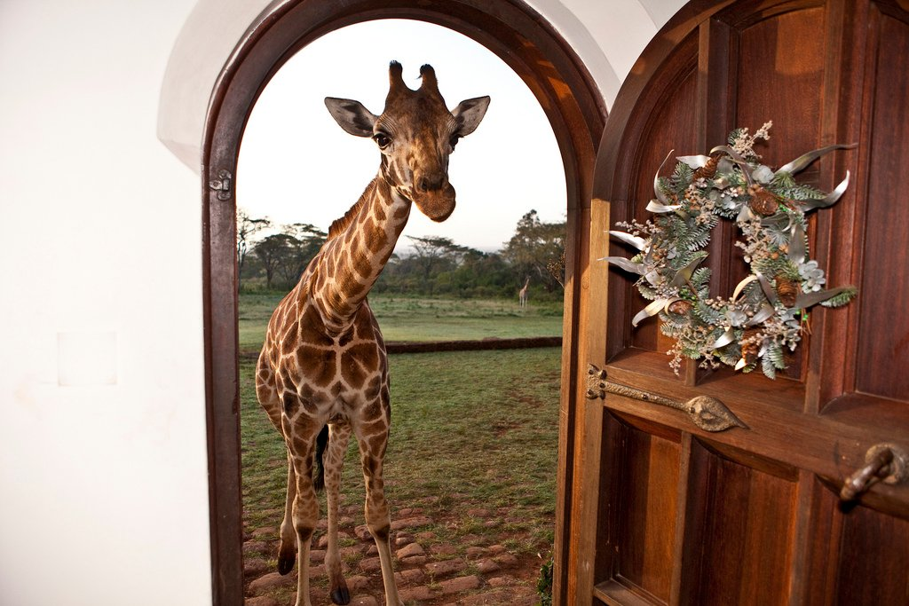 Rooms: Giraffe Manor The Most Magical Place On Earth