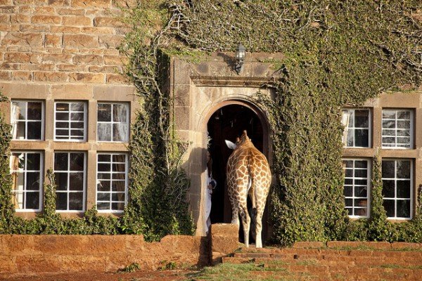 The Giraffe Manor in Kenya