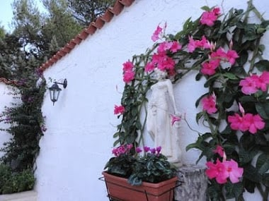 Courtyard flowers and Angel statue