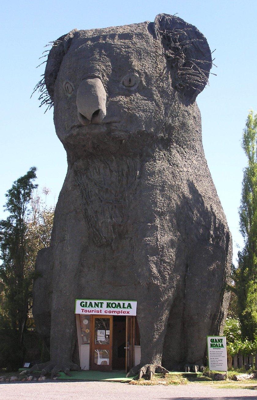 The Giant Koala
