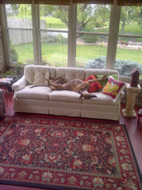 Before sunroom floor is red and Mario the greyhound catching a nap