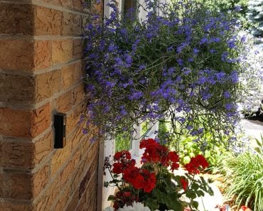 Entrance curb appeal with flowers - Housekaboodle
