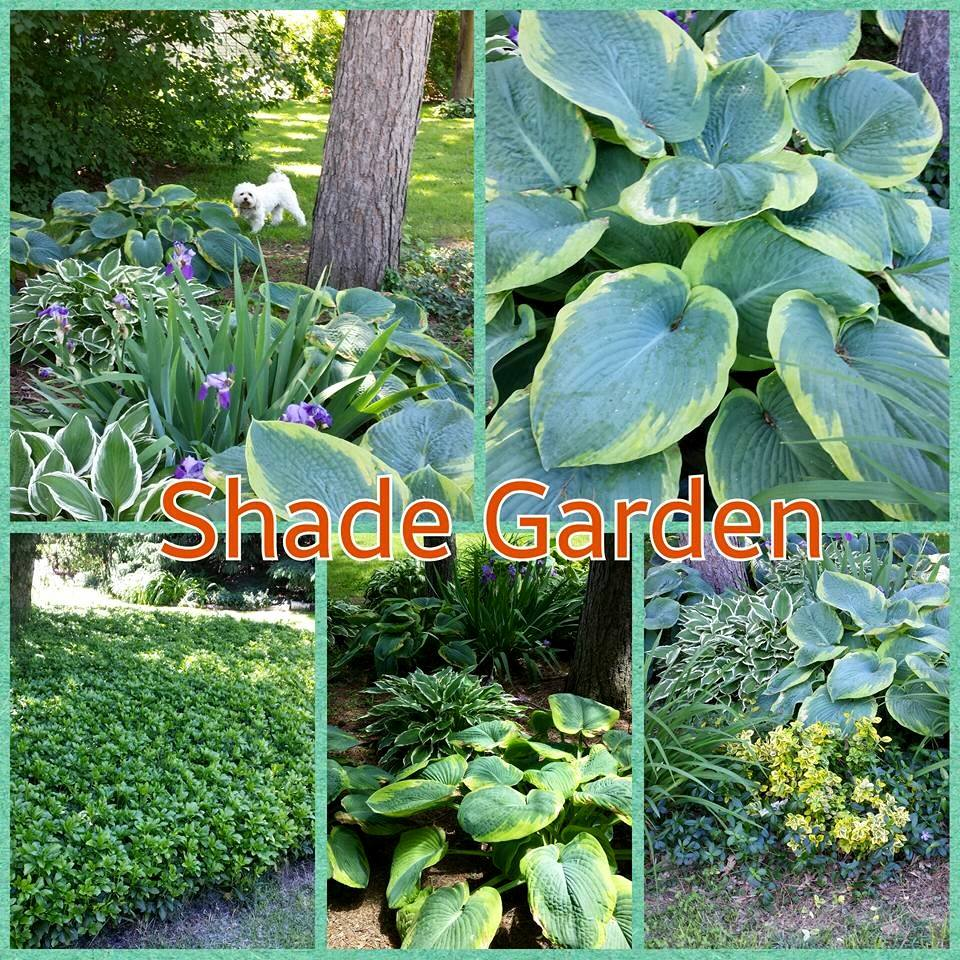 Garden Design with Hosta and Ground Cover