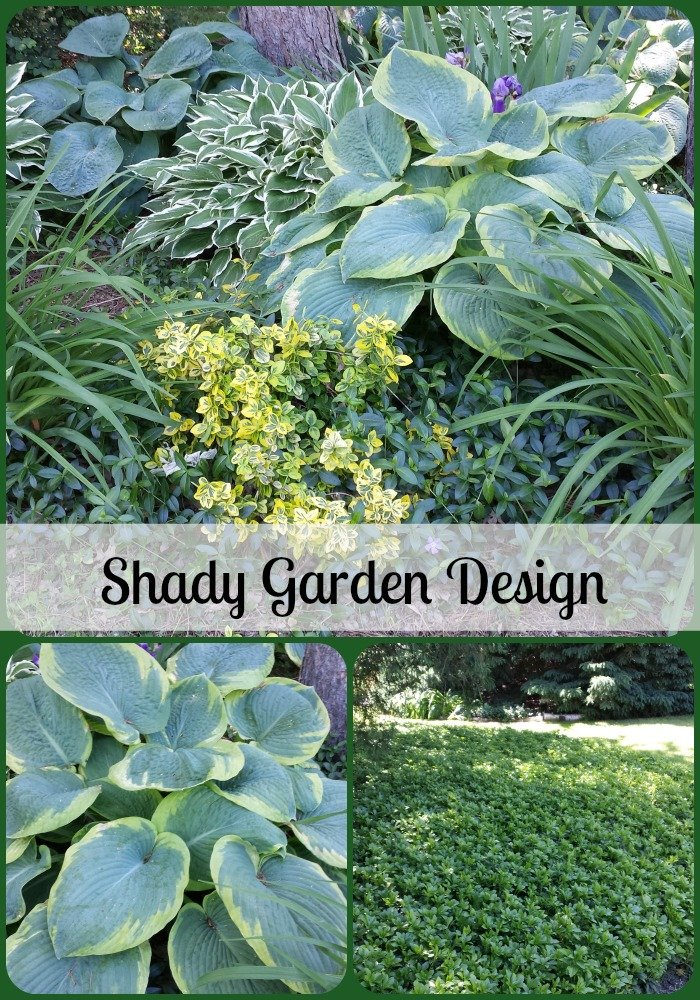 Our garden design with hosta and ground cover for Garden design ideas shady areas