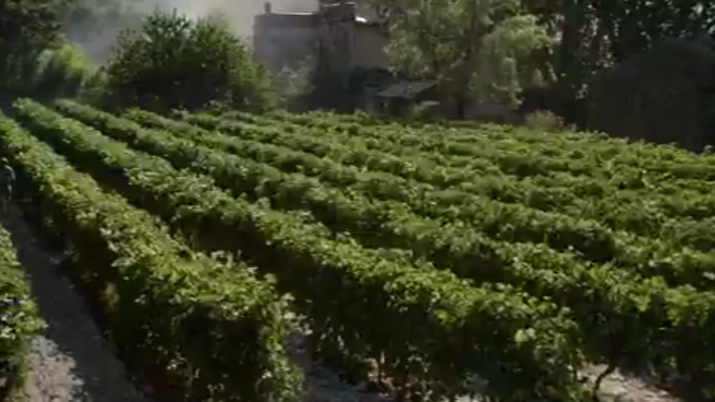 Vineyards in the movie A Good Year